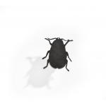 Малка брошка бръмбар